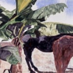 Mares With Banana Tree